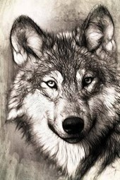 A Drawing of a Wolf, for the Love of Animals