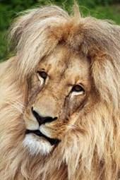 Katanga Lion Journal