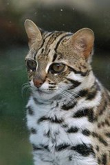 Leopard Cat Journal | Cool Image |