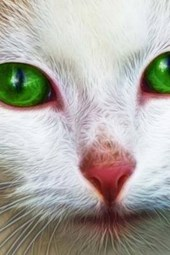 A White Cat with Bright Green Eyes