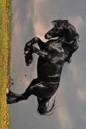 A Beautiful Black Horse Rearing Up