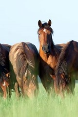 Horses Gathered in a Field | Unique Journal |