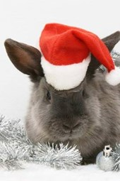 A Cute Gray Bunny Dressed Up for Christmas