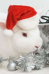 A Cute White Bunny Dressed Up for Christmas