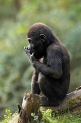 Baby Gorilla Journal | Cool Image |