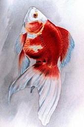 Ryukin Goldfish Painting