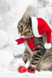 A Cute Cat Dressed Up for Christmas