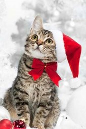 A Cute Cat Making Christmas Wishes