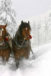 A Sleigh Ride Through the Snow with Two Horses