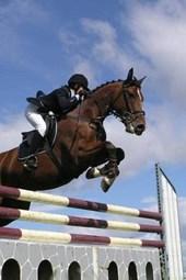 Big Bay Horse and Rider Jumping Perfectly
