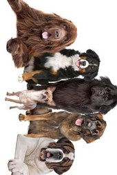 5 Big Dogs and Their Chihuahua Leader