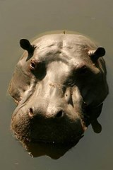 Hippo Rising Aka Hippopotamus Surfacing Journal | Cool Image |