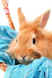 Bunny Rabbit in a Basket with a Blue Scarf
