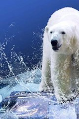 Confronted by the Polar Bear | Unique Journal |