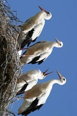 Four Storks in the Nest | Unique Journal |