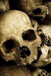 A Pile of Creepy Human Skulls