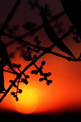 Young Olives at Sunset in Italy Journal | Cool Image |