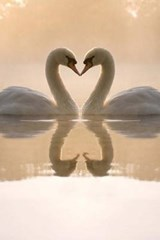 Love Is in the Air, Two Beautiful Swans | Unique Journal |