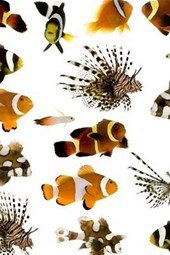 Lionfish and Clownfish Collage