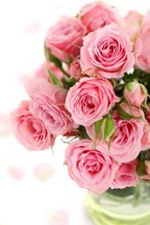 A Bouquet of Brilliant Pink Roses in a Glass Vase