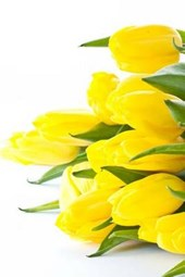 A Brilliant Yellow Tulip Flower Arrangement