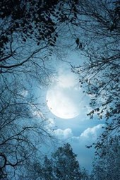 A Blue Full Moon in the Forest