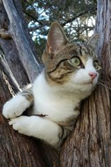 Tabby Cat in a Cedar Tree Journal | Cool Image |