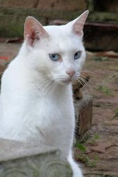 A Beautiful White Cat with Blue Eyes in the Garden