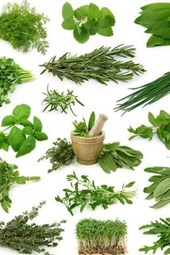 A Collage of Fresh Herbs from the Garden