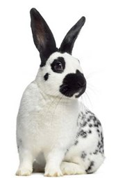 Checkered Rabbit Journal