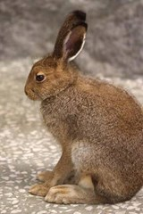Gray Hare Journal | Cool Image |
