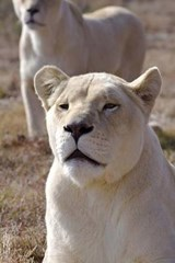 White Lioness Journal | Cool Image |