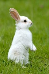 White Rabbit in the Grass Journal | Cool Image |