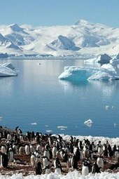 A Large Group of Penguins on the Shore in Antarctica