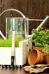 A Miniature Indoor Garden and Tools