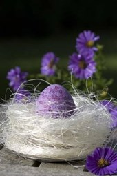 A Purple Easter Egg in a Bird's Nest