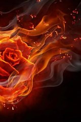 A Rose on Fire | Unique Journal |