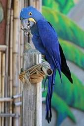 Blue Parrot Journal