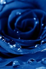 A Spectacular Blue Rose and Dew Drops | Unique Journal |