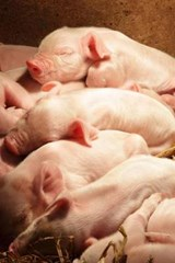 The Sleeping Piglets Journal | Cool Image |