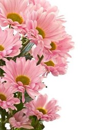 Beautiful Pink Chrysanthemums Floral Arrangement