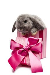 Gray Bunny with a Pink Christmas Gift Box and Bow