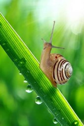 Onwards and Upwards a Snail Climbs