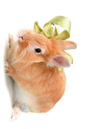 Side Profile of a Cute Little Bunny Rabbit with a Green Bow