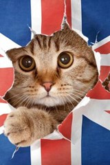 British Cat Breaking Free Journal | Cool Image |