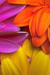 Colors from Three Flowers Journal | Cool Image |