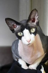 The Sphinx Cat Journal | Cool Image |