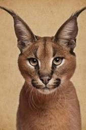 Regal Caracal Wild Cat Portrait Journal