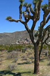Scenic View of a Tree in the Desert Off Highway 101 USA Road Trip Journal