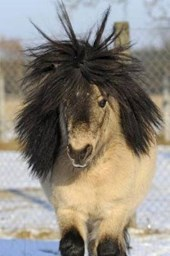 Mini Shetland Pony Having a Bad Hair Day Lined Journal